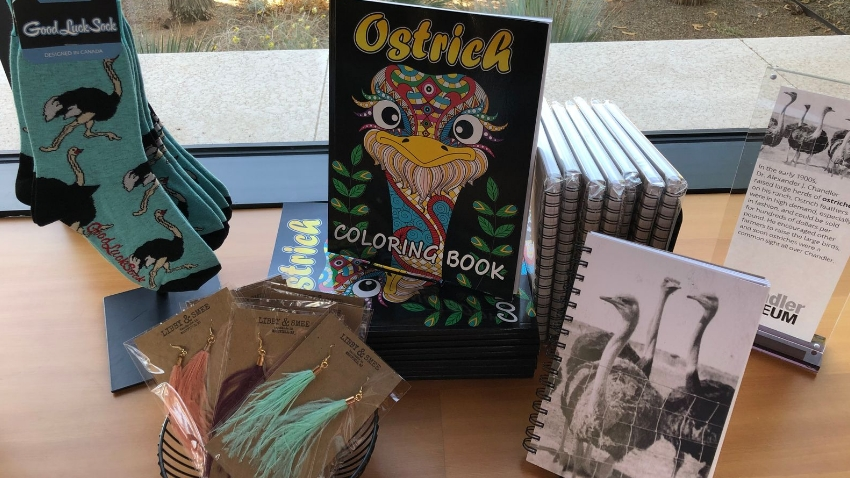 Ostrich Book at the Museum Store