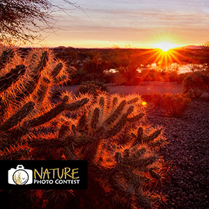 Nature Photo Contest