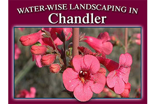Water Wise Landscaping in the Arizona Desert