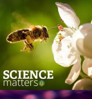 Science Matters @ CPL: Keeping Our Bees