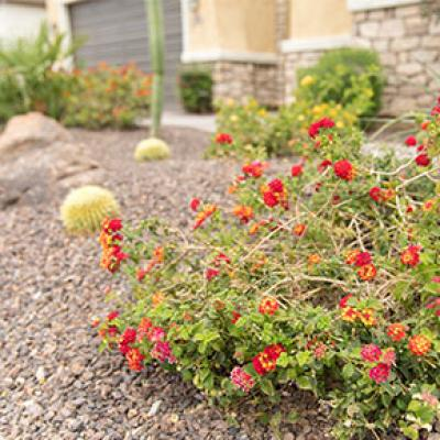 Water Conservation Rebate Programs City Of Chandler