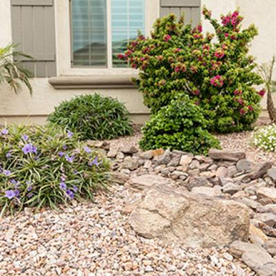 Great use of Xeriscape Landscape