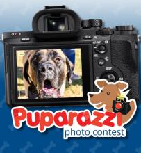 Puparazzi Photo Contest