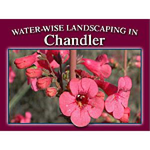 Water-Wise Landscaping in Chandler
