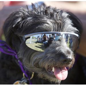 Woofstock Dog In Sunglasses